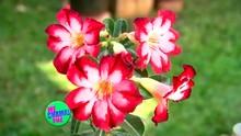 Conheça a Fabiana e sua linda coleção de flores do deserto (Divulgação/RPC)