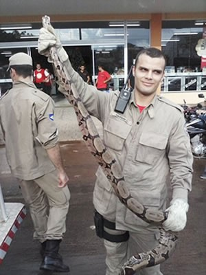 Bombeiros foram acionados para fazer o resgate do animal (Foto: site Notícias do Norte/José de Arimatéia)