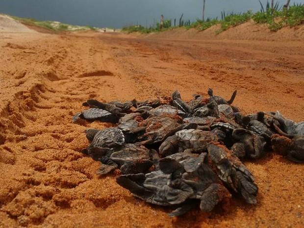 Tartarugas são atropeladas em São Miguel do Gostoso, RN (Foto: Heldene Santos/ONG Amjus)