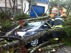Árvore cai e atinge carro em Mogi das Cruzes