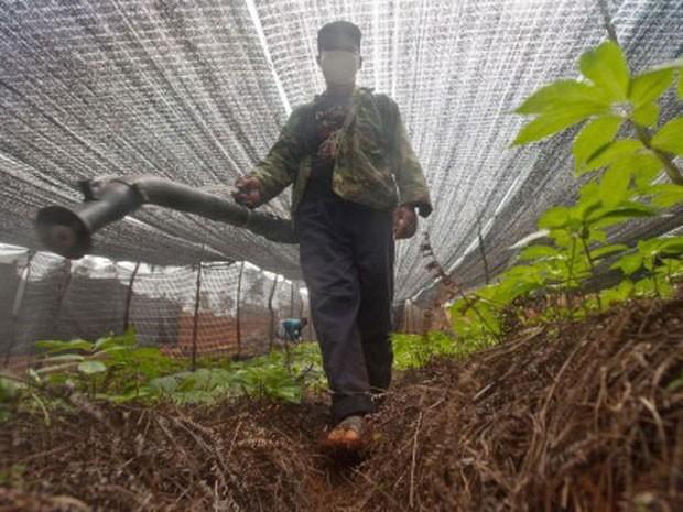 Trabalhador despeja pesticida em plantação de ervas na China (Foto: Simon Lim/Greenpeace/AFP)