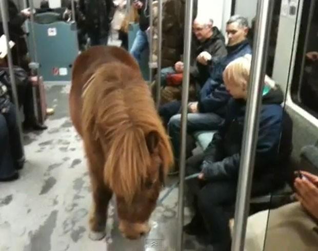 Passageira foi filmada viajando com pônei em trem na Alemanha (Foto: Reprodução)