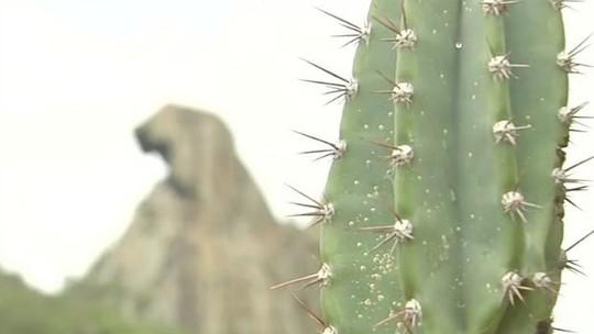 Foto: (TV Verdes Mares/Reprodução)