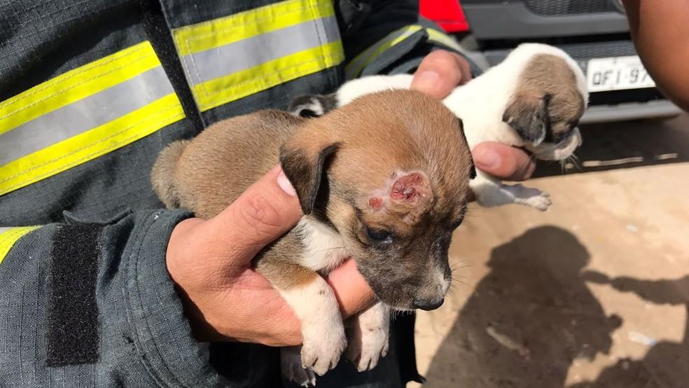 Filhotoes de cachorros foram resgatados das chamas pelo Corpo de Bombeiros (Foto: Walter Paparazzo/G1)