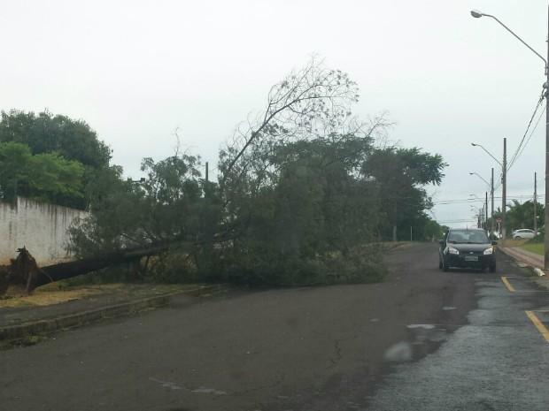 Quedas de árvores foram registradas em Chapecó (Foto: Clair Bazi/Defesa Civil)