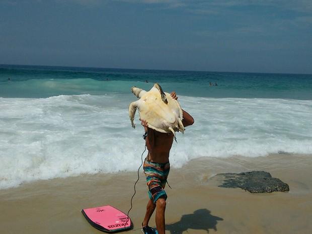 Outras duas tartarugas foram encontradas este mês em praias do Rio (Foto: Marcello Farias/ Salvemos São Conrado)