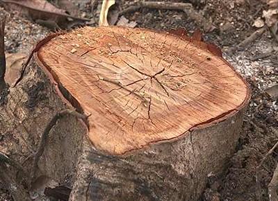 tv-desmatamento-ilegal-amazonas (Foto: Reprodução)