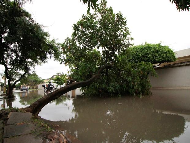 Temporal derrubou árvores na capital pernambucana e em outras cidades da Região Metropolitana do Recife (Foto: Marlon Costa Lisboa/Pernambuco Press)