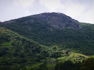 Pedra Branca é reserva que guarda plantas raras e aves da Mata Atlântica (Foto: Devanir Gino/TG)