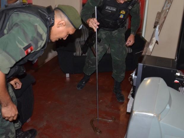 Cobra estava entre as telhas da casa e assustou os moradores que acionaram a Polícia Ambiental para capturar o animal (Foto: Walter Paparazzo/G1)