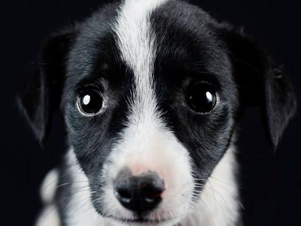 Filhote fêmea é uma das participantes do ensaio fotográfico dos cachorros resgatados pela Prefeitura de Piraquara (Foto: Prefeitura de Piraquara / Divulgação)