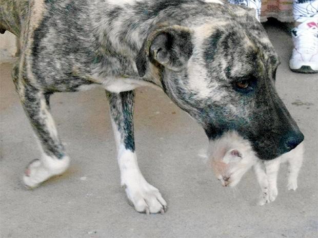Com cuidado, cachorra pega filhote com a boca (Foto: Stella Reis/EPTV)