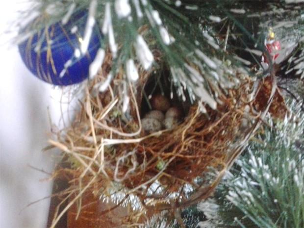 Pássaro construiu seu ninho em uma árvore de Natal em Altinópolis  (Foto: Aline Cristina Souza/ VC no G1)