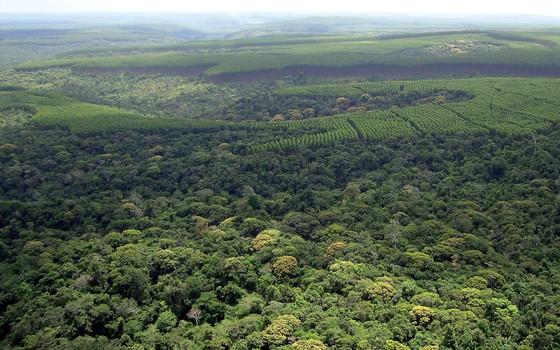 Paisagem mostra um mosaico de florestas plantadas (Foto: Gleison Rezende)