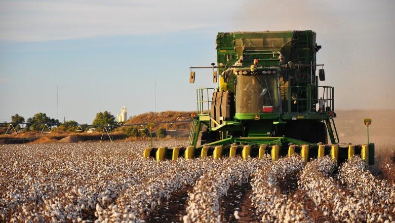 algodao-colheita-safra-pluma (Foto: Kimberly Vardeman/CCommons)