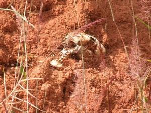 Crânio em meio à erosão do terreno de fazenda desativada em Redenção da Serra. (Foto: Lucas Nogueira/Prefeitura de Redenção da Serra)