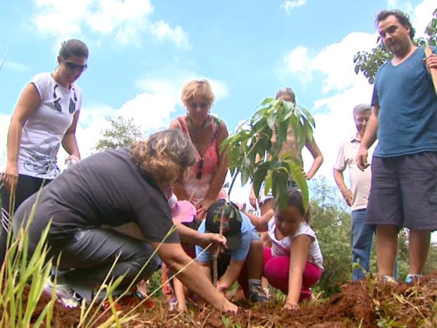 Voluntários tentam plantas mudas (Foto: Reprodução/ EPTV)