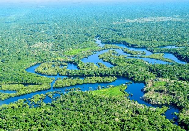 Biodiversidade do Brasil ; meio ambiente ; Amazônia ;  (Foto: Reprodução/Facebook)
