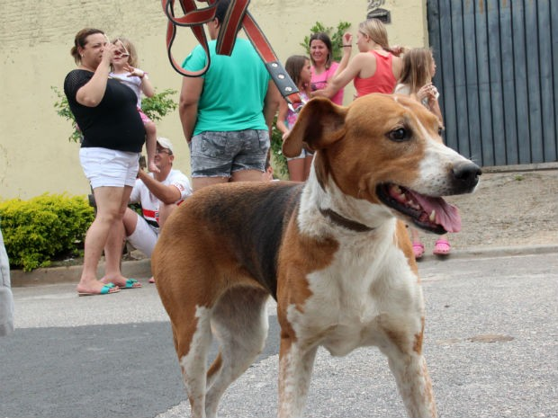 Moradores temem que mais animais sejam envenenados em rua de Sorocaba (SP) (Foto: Jomar Bellini / G1)