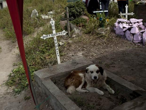 Cão descansa sobre túmulo no cemitério da Virgem de Lurdes, em Lima, no Peru (Foto: AP)