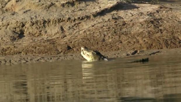 Al McGlashan flagrou um enorme crocodilo devorando outro menor em rio na Austrália (Foto: Reprodução/YouTube/Al McGlashan)