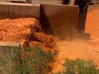 Biólogo avalia que forte chuva pode acelerar assoreamento do Rio Doce