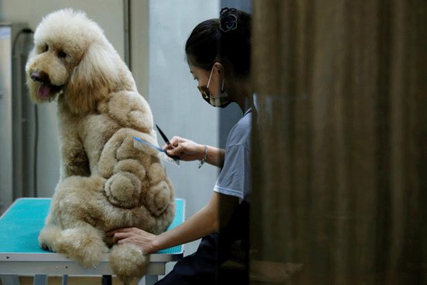 Cão com corte de desenho de ursinho de pelúcia (Foto: Tyrone Siu/Reuters)