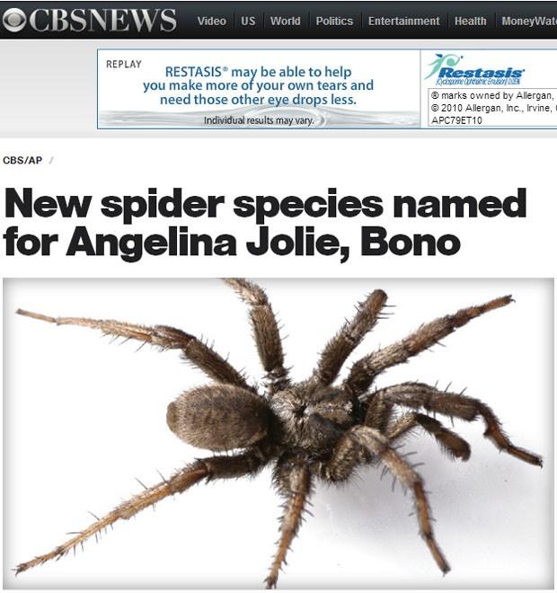 Exemplar da espécie de aranha