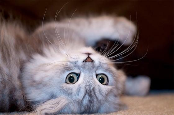 Vômitos e diarreias em gatos merecem atenção especial, de acordo com a veterinária Fernanda Fragata (Foto: sxc)
