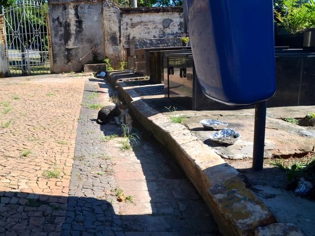 Restos de comida no Cemitério da Saudade em Piracicaba (Foto: Claudia Assencio/G1)