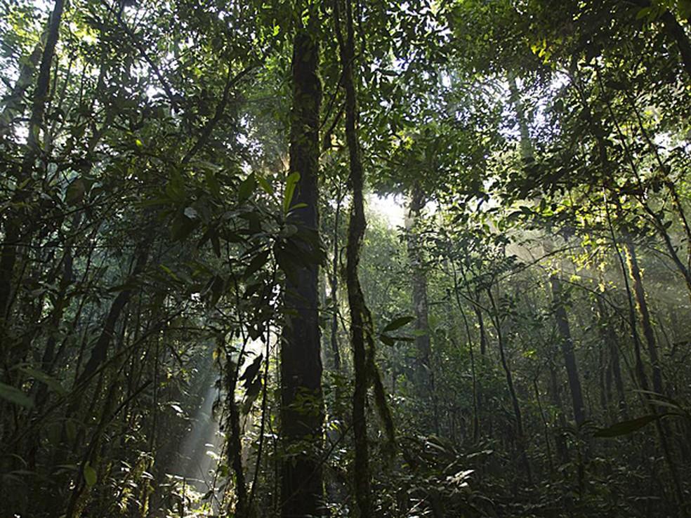 Floresta Amazônica pode entrar em círculo vicioso de seca e desamatamento (Foto: Mileniusz Spanowicz/WCS)