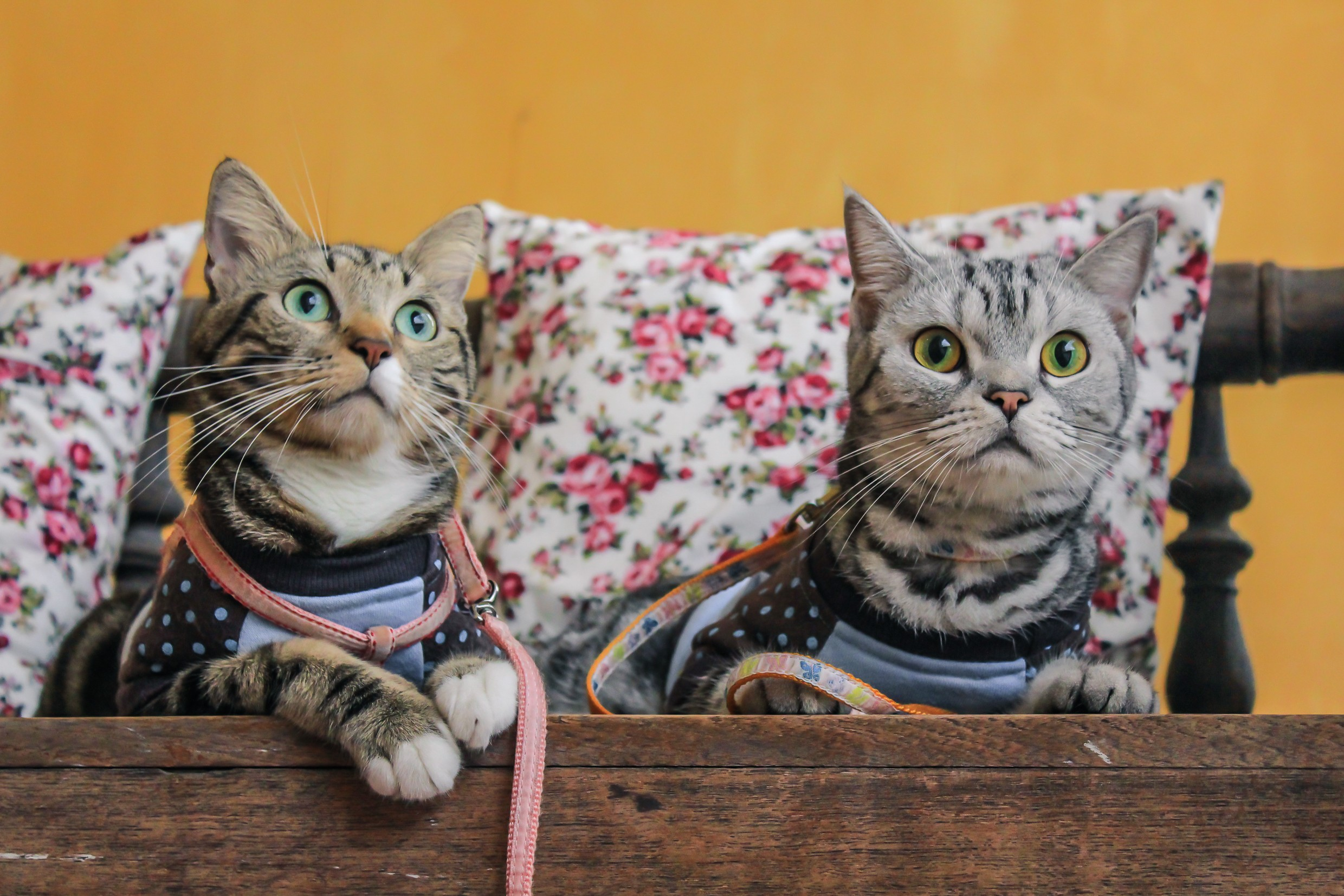 Gatos (Foto: Thinkstock)