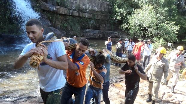 Auxílio de cerca de dez homens foi necessário para retirada do animal. (Foto: Pedro Fernando Santiago / Pq. Estadual da Serra Azul)