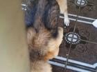 Cão é encontrado em estado de abandono em Bauru