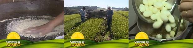 Caminhos do Campo - Chá Verde (Foto: Reprodução/RPC TV)