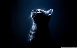 kitten in the dark