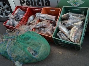Aproximadamente 100 quilos de peixe e uma rede foram apreendidos em Piracicaba (Foto: Luiz Felipe Leite/G1)