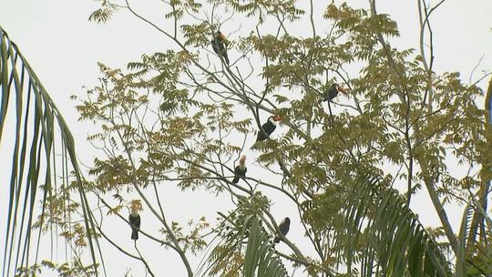 Tucanos viram atração em quintal de professor de Tapiratiba, SP