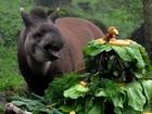 Zoológico comemora aniversário e antas ganham bolo especial no RS