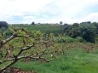 Roteiro revela opções de agroturismo no Circuito das Frutas em Valinhos