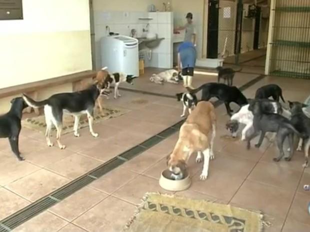 Centro de zoonoses sobrevive com doações, diz voluntários (Foto: Reprodução/TV TEM)