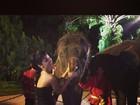Rihanna tira foto com elefantes em viagem pela Tailândia