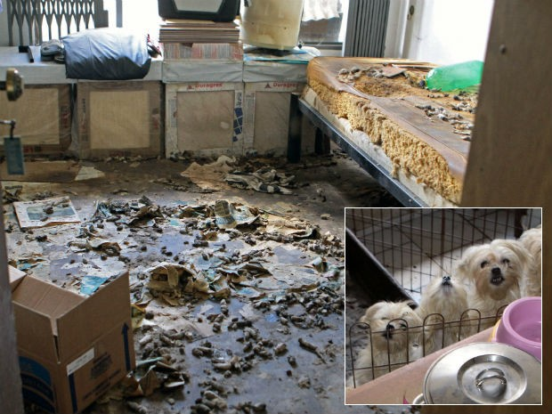 Cães eram mantidos em péssima condição (Foto: Valdecir Galor/SMC/Divulgação)