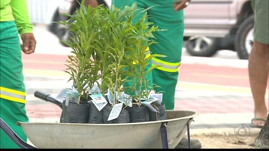 TV Cabo Branco inicia projeto ambiental com plantio simbólico em João Pessoa
