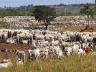 Mato Grosso registra 27 focos de raiva bovina em cinco meses