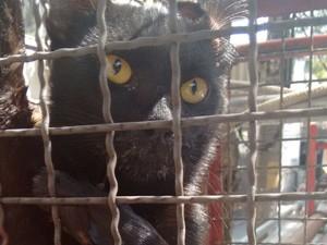Gato sobreviveu (Foto: Andrea Damasceno / Arquivo pessoal)