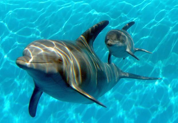 Passeios para nadar com golfinhos são alguns dos que não serão mais vendidos pelo site TripAdvisor (Foto: Getty Images)