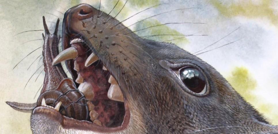 Presa central do marsupial era capaz de destroçar caracóis com um só golpe (Foto: Reprodução/Peter Schouten)