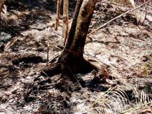 Incêndio destrói árvores em Ilhéus (Foto: Corpo de Bombeiros/Ilhéus)