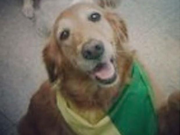 Lola, cadela de estimação de Angélica e Luciano Huck (Foto: Instagram/ Reprodução)